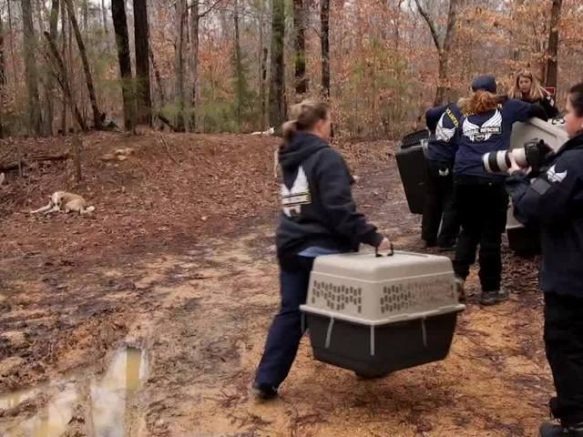 WEB EXTRA: Mysterious Mountain Man Surrenders Life In The Woods With His Dogs
