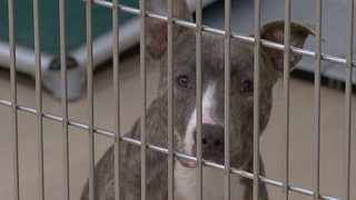 Mid-State Shelters Offer Free Adoptions