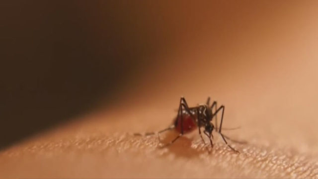 Nashville Mosquitoes Test Positive For West Nile - Story