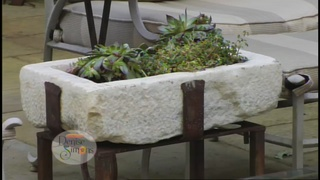 LifeStyle with Denise Simons: Innovative Green D
