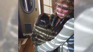 Judge Denies Monkey From Upcoming Trial