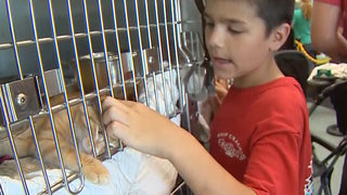 Fee-Free Pet Adoption Helps Hundreds Find Homes