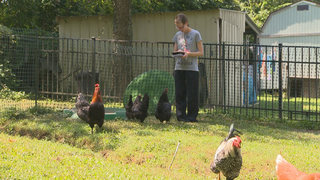 People Push for New Chicken Ordinances