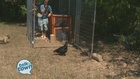 A Visit with Nick Beres and His New Chickens