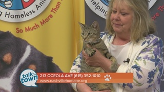Nashville Humane Assn. Pet of the Week 9-23-16