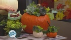 DIY Pumpkin Succulent Centerpiece Ideas