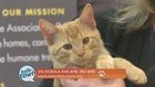 Nashville Humane Assn. Pet of the Week 10-21-16