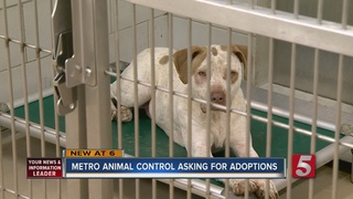 Consider Pet Adoptions For The Holidays