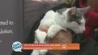 Nashville Humane Assn. Pet of the Week 1-13-17