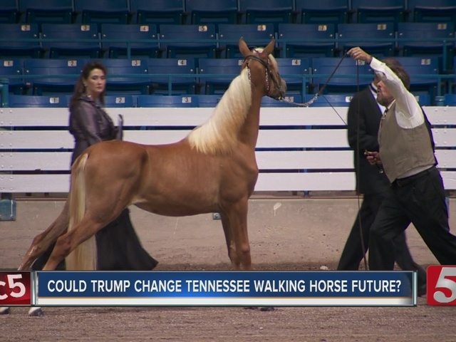 USDA Bans Tools Used In Tennessee Walking Horse Industry