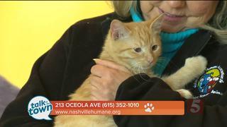Nashville Humane Assn. Pet of the Week 1-27-17