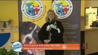 Nashville Humane Assn. Pet of the Week 02-03-17