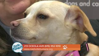 Nashville Humane Assn. Pet of the Week 2-17-17