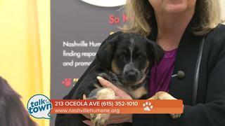 Nashville Humane Assn. Pet of the Week 2-24-17