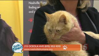 Nashville Humane Assn. Pet of the Week 3-3-17