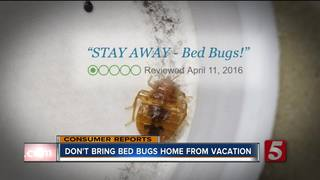 Don't Bring Bed Bugs Home From Vacation