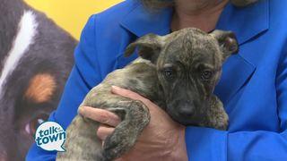 Nashville Humane Assn. Pet of the Week 3-10-17