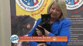 Nashville Humane Assn. Pet of the Week 3-15-17