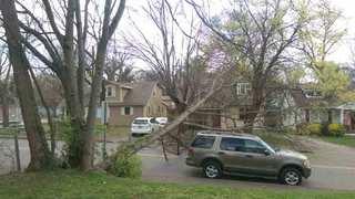 Tree Falls, Blocks Sharpe Avenue