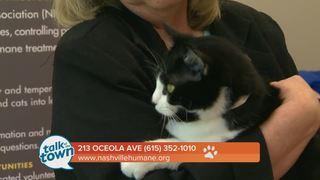 Nashville Humane Assn. Pet of the Week 4-14-17