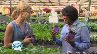 Best Varieties To Grow & Many Uses of Herbs