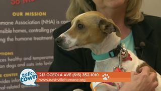 Nashville Humane Assn. Pet of the Week 4-21-17