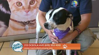 Nashville Humane Assn. Pet of the Week 5-26-17