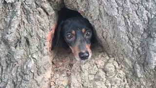 Troopers, Firefighter Rescue Dog Trapped In Tree