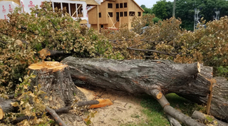 Cleveland Park Tree Illegally Chopped Down
