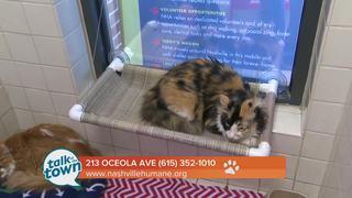 Nashville Humane Assn. Pet of the Week 6-23-17