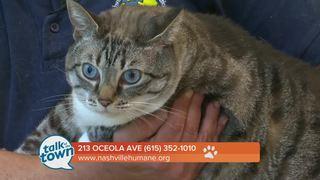 Nashville Humane Pet of the Week 7/7/17