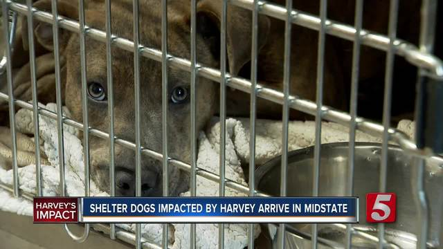 Md. shelter welcomes animals affected by Harvey