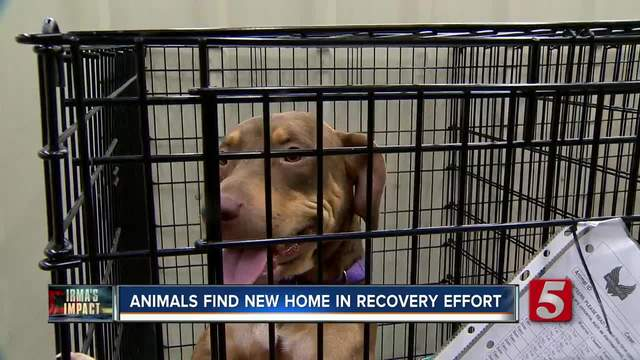 Irma: abandoned pets' owners facing criminal charges