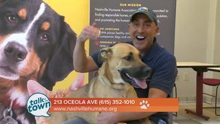 Nashville Humane Assn. Pet of the Week 7-14-17