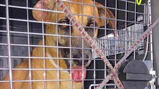 Homeless Animals Affected By Irma Arrive In TN
