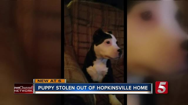Puppy Stolen During Hopkinsville Burglary