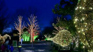Families Visit Cheekwood's Holiday Lights