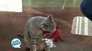 The Nashville Cat Show Preview