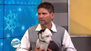 Winter Dangers for Pet Owners