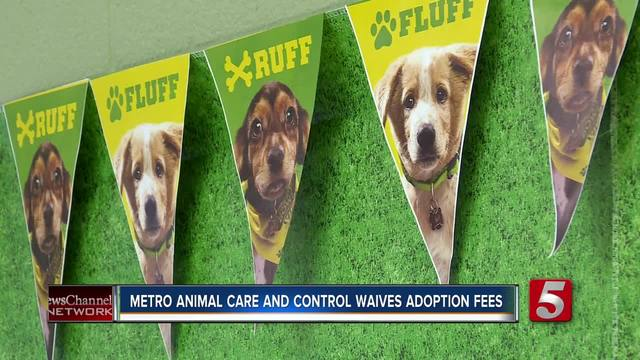 Metro Nashville Dog Adoption