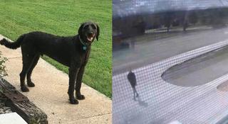UPS Driver Hits, Kills Mid-State Family's Dog