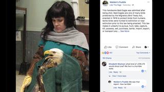 Bald Eagle Found Shot In Nashville