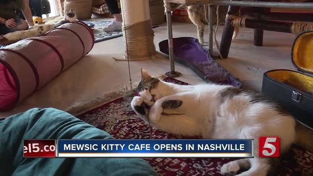 Cat Cafe Nashville