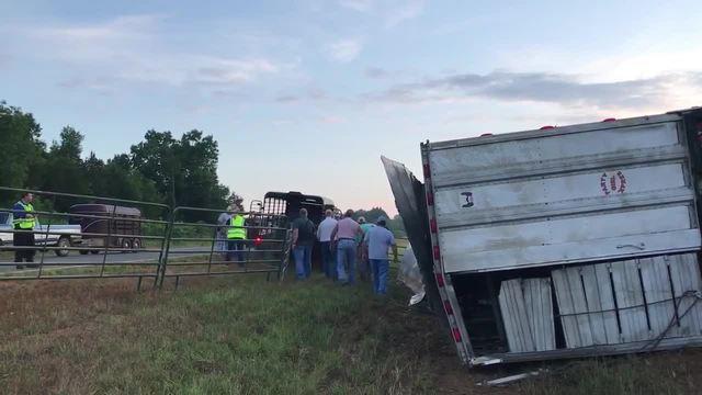 Overturned Cattle Trailer Shut Down I-65