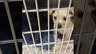 32 Dogs Rescued From Dire Heat Situation
