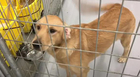 Court Battle Keeps Rescued Animals In Cages
