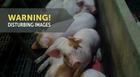 JBS USA Suspends Shipments From Tosh Farm