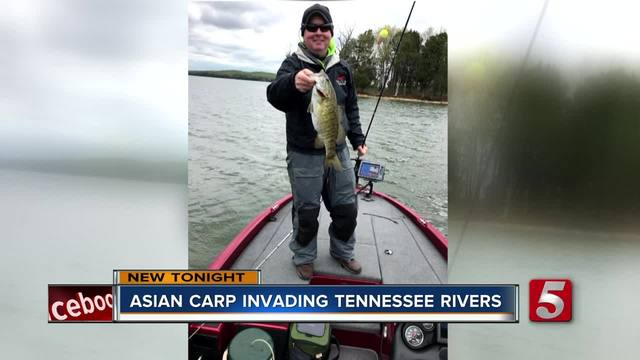 TWRA Looks To Curb Asian Carp Invasion