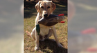 Family Loses Dog During Humphreys Co. Crash