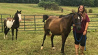 Local Animal Rescue Needs Help Caring For Horses